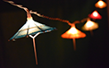 Parasol String Light Set - AI-0294