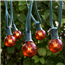 Amber Commercial Globe Lights 50'